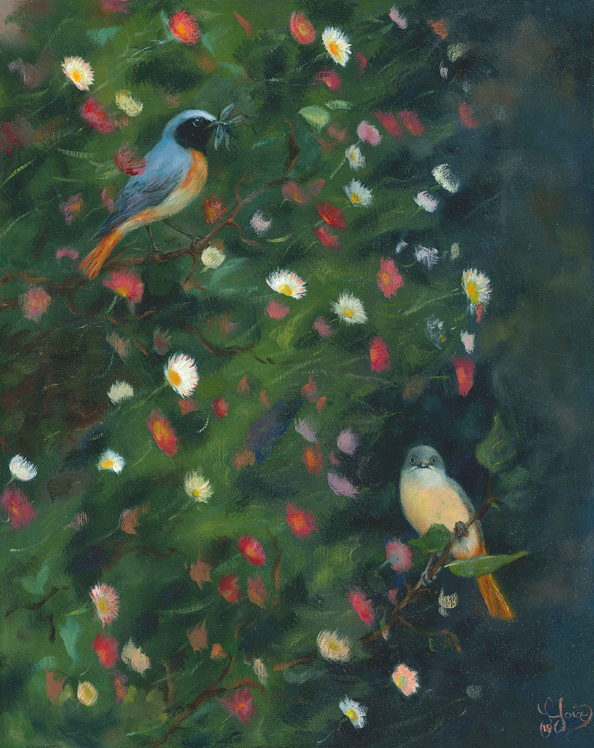 Redstarts and Erigeron Daisies, Stazzema. Oils on wood panel - 30 x 24 cm