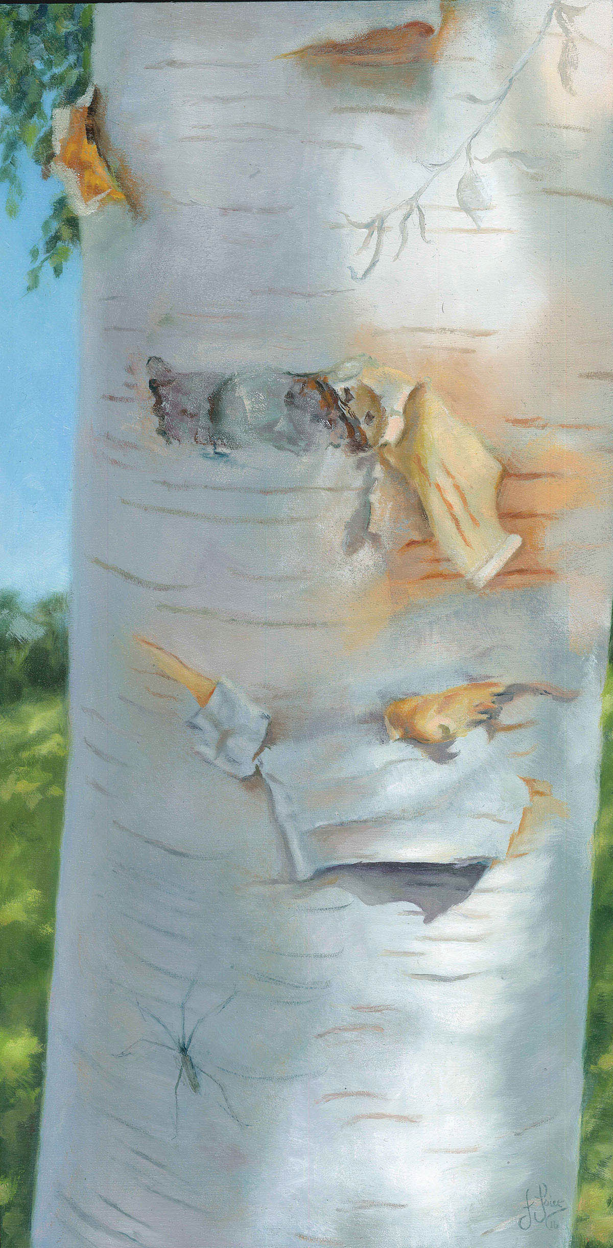 Rhapsody to the Himalayan Birch - 40 x 20 cm