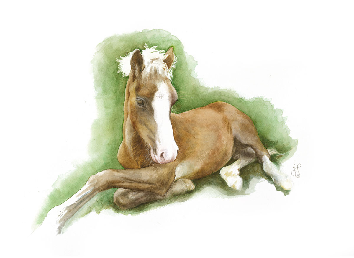 Welsh cob foal - watercolour - 53 x 46 cm